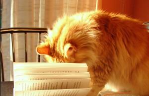 Kat met boek